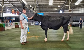 2018 Supreme Champion Dairy Heifer Awarded
