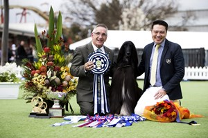 2018 Royal Melbourne Show All Breeds Championship Show Winner